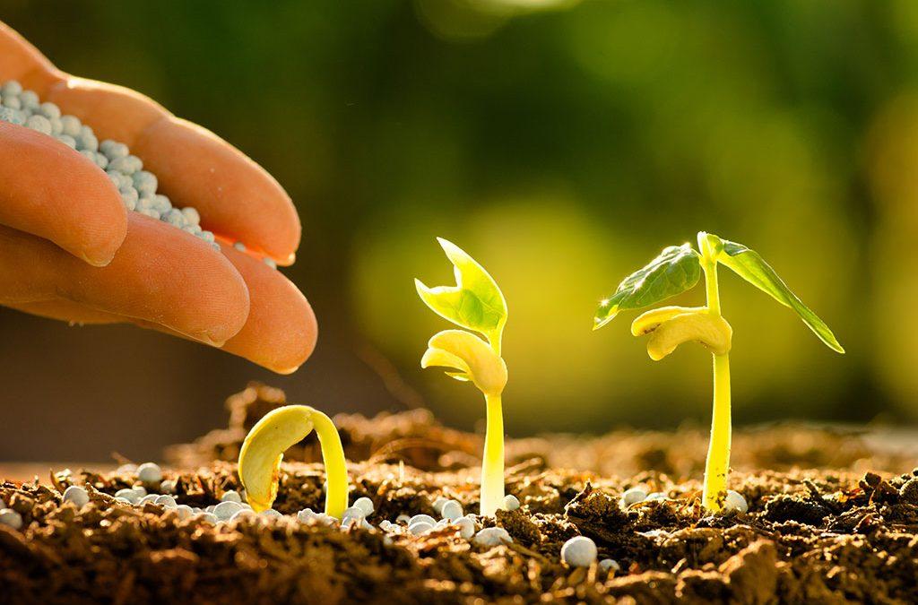 Talcher Fertilizers Limited